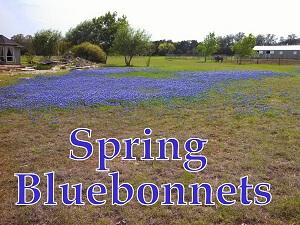 Bluebonnets at 751 Silver Creek Dr Leander Texas 78664